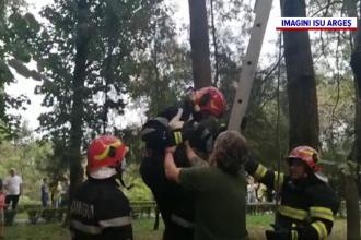 Motanul Bebe, salvat de pompieri după ce nu s-a mai putut da jos din copac