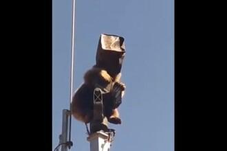 VIDEO. Incident inedit în Turcia. Cum a reușit un urs să