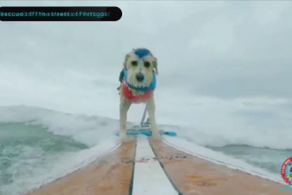 Concurs în California. S-a acordat premiul pentru cel mai bun câine care face surf