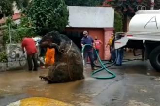 """Muncitorii din capitala mexicană, îngroziți după ce au văzut un """"șobolan gigant"""" din gunoaie"""