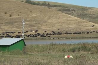 Din cauza secetei, fermierii au început să investească în irigaţii. Câţi bani pot primi de la UE