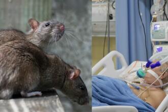 Trupul unui bărbat mort de Covid-19, mâncat de șobolani într-un spital din India