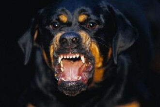 Un ciobănesc german și un Rottweiler au făcut măcel la Zoo Timișoara