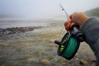 Ministrul Mediului: Pescuitul sturionilor, interzis pe o perioadă nedeterminată