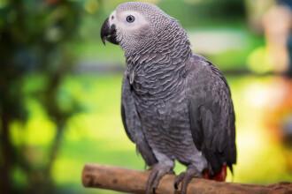 Cinci papagali de la Zoo au fost mutați într-un țarc închis după ce au început să înjure vizitatorii