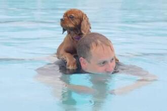 """Petrecere inedită pentru câini într-o piscină istorică din Marea Britanie: """"Mă simt ca un părinte mândru. Cred că i-a plăcut"""""""