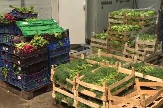 Tinerii care vor să fie fermieri pot primi 70.000 de euro ajutor. Ce trebuie să facă
