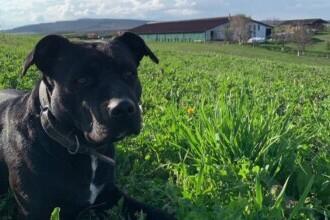Mureș: Un câine a dispărut fără urmă de câteva zile. Apelul disperat al proprietarilor patrupedului
