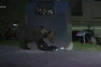 Un bărbat din Comarnic, în stare gravă. A fost atacat de un urs chiar în curtea sa