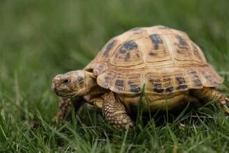 Franța: Sancțiuni de peste jumătate de milion de euro pentru distrugerea habitatului unei țestoase pe cale de dispariție