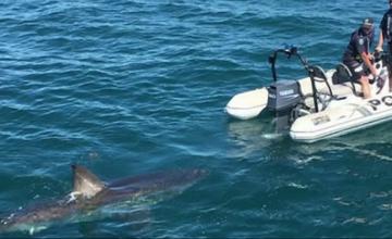 Doi polițiști într-o barcă gonflabilă, urmăriți de un rechin uriaș