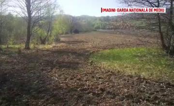 Autorităţile din Sibiu, în control după ce o poiană cu narcise a fost arată. Ce spune fermierul