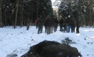 Noi detalii despre mistrețul radioactiv găsit în România. Ce spune DSVSA