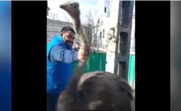 Interlopii din Murgeni au transmis live pe Facebook cum taie gâtul unui struț. Autoritățile spun că nu au făcut nimic greșit