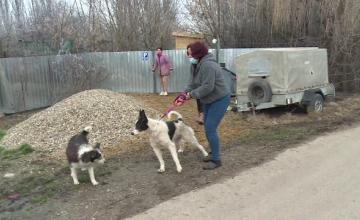 O femeie a găsit trei câini spânzurați, într-un sat din Bihor