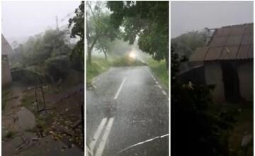 Furtună devastatoare la Botoșani: Vântul a rupt copaci și smuls acoperișuri. VIDEO