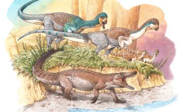 bunic crocodil