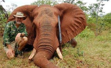 Raspunsul uluitor al unui parlamentar australian, acuzat ca a vanat un elefant in Zimbabwe. \