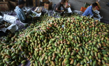 Fenomenul care a dus la un surplus de două milioane de kg de mango în Filipine