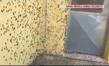 Invazie de lăcuste într-o regiune. Au devorat totul în calea lor
