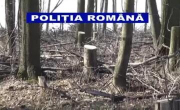 Padurile Romaniei dispar hectar dupa hectar! Peisaj dezolant in judetul Galati, din cauza taierilor necontrolate