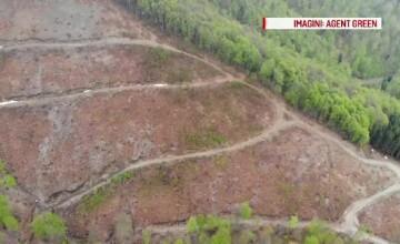 Reacția unui oficial european după ce a văzut defrișările masive din România