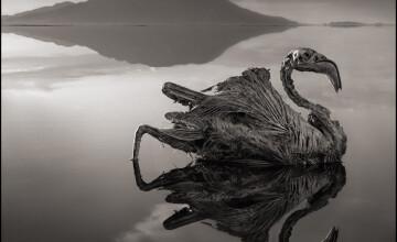 Fenomenul infricosator care se petrece langa acest lac. Animalele se transforma in stana de piatra