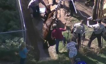 Misiunea de salvare a unui cal din Arizona, care a cazut intr-un sant. Animalul \