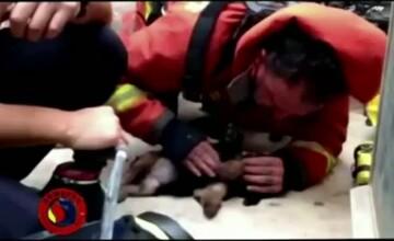 Imagini emotionante difuzate in direct in Spania. Pompierii s-au luptat minute intregi sa salveze un catelus intoxicat cu fum