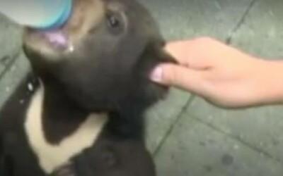 Un barbat din China a adoptat un caine, dar si-a dat seama ca era un alt animal! Ce soc a avut cand si-a dat seama