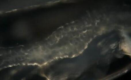 microb in apa