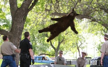 """Atentie, cad ursi. In SUA un urs negru a aterizat pe o saltea, dupa un """"zbor"""" de 4,5 metri. VIDEO"""