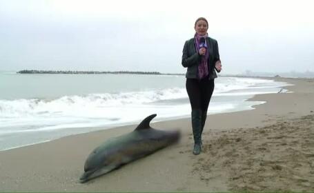 Delfin mort pe plaja