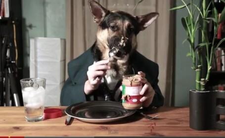 VIDEO devenit viral. Un ciobanesc german mananca unt de arahide exact ca un om
