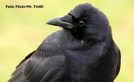 corb cu privire inteligenta