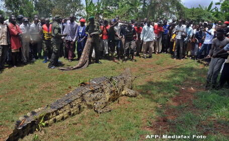 crocodil Uganda
