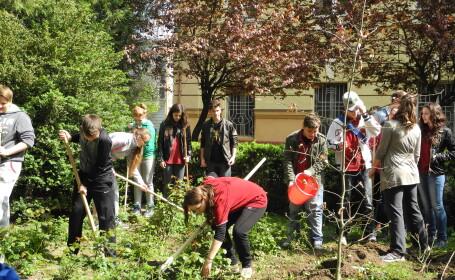 elevii planteaza pomi