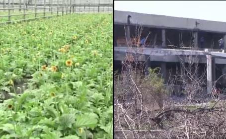 Serele Codlea, raiul hotilor de fier vechi. Cum arata locul de unde plecau la export milioane de tone de flori in \'89