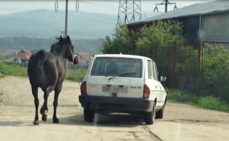Cal legat cu lantul si tras dupa masina. Imagini primite de la un utilizator www.StirileProTV.ro