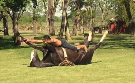 O noua metoda de a trata sau imblanzi caii: yoga pentru animale. VIDEO
