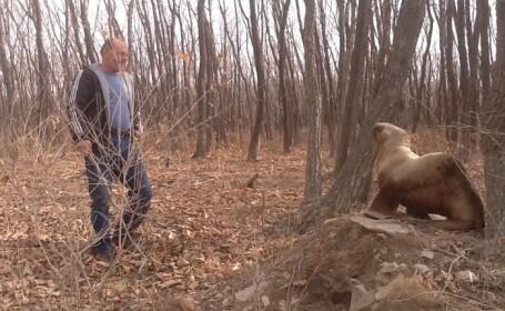 leu de mare, Rusia