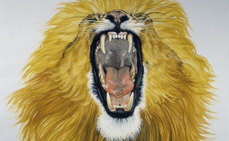 Leu furios