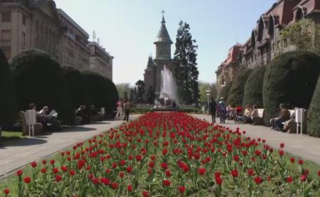 Pasiunea pentru flori, transformata intr-o afacere extrem de profitabila pentru unii romani: \