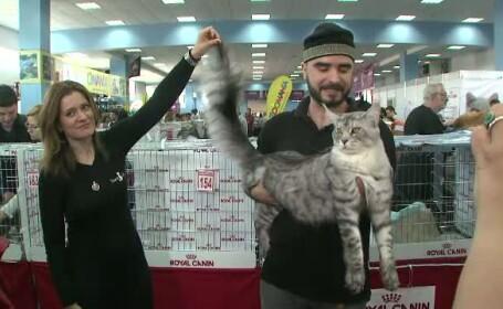 Concurs pisici
