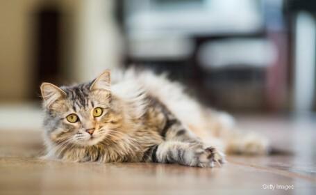 Aceasta pisica s-a intors zilnic, timp de un an, in acelasi loc. Toti sunt emotionati pana la lacrimi cand ii afla povestea