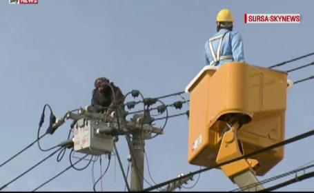 Mobilizare de forte in Japonia, dupa ce un cimpanzeu a evadat de la gradina zoologica. Unde l-au prins pe \