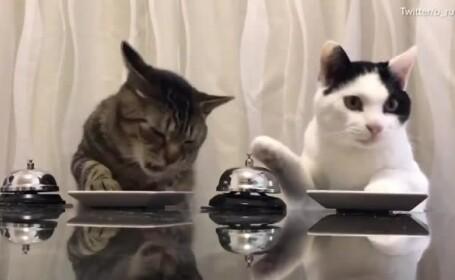 Clipul in care doua pisicute apasa pe sonerie pentru a primi mancare, viral pe internet. Politicianul fermecat de imagini