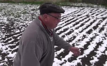Iarna neasteptata provoaca probleme agriculturii din Romania. Fermierii spera sa primeasca despagubiri de la Guvern