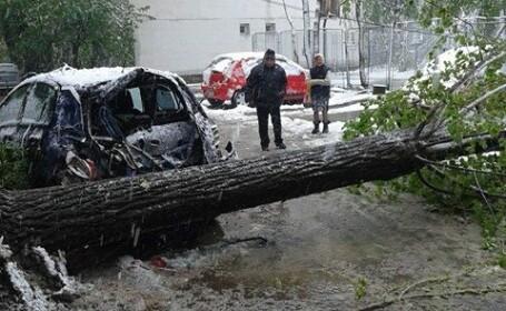 Mii de arbori au cazut in Iasi, din cauza greutatii zapezii, mai multe masini au fost avariate. Teiul lui Eminescu, afectat