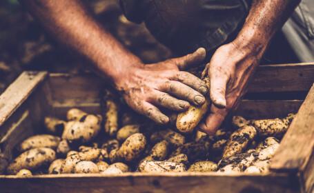 Cartofii, citricele şi alte fructe meridionale s-au scumpit cel mai mult în mai. Preţul unui kg